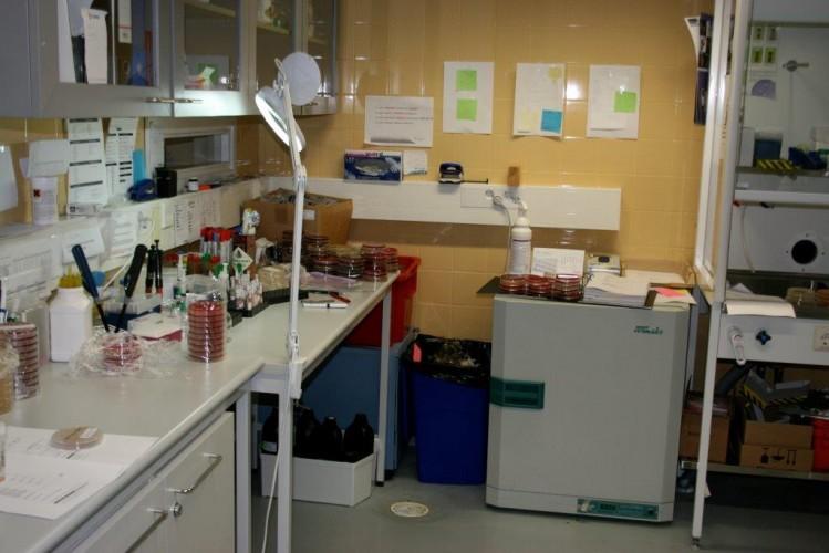 Laboratorionäytteestä apua tuotantoeläinten hoitoon