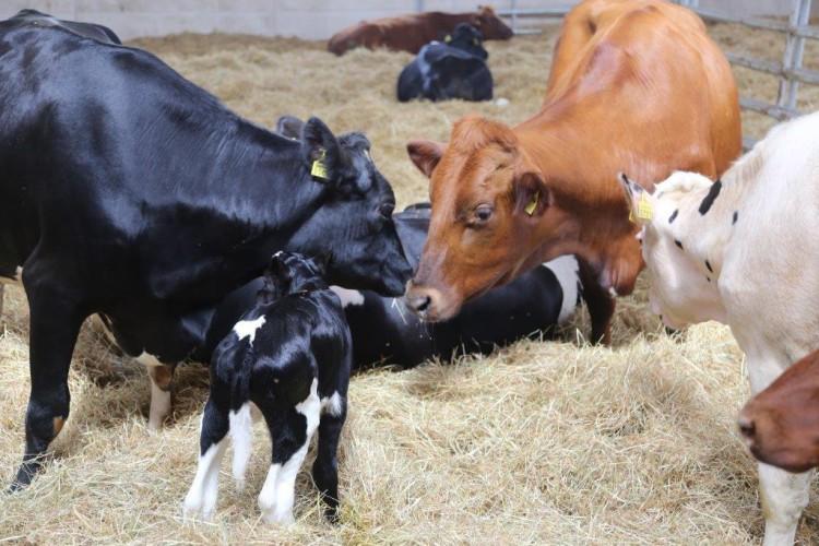 FarmTest: Taudit kannattaa torjua jo poikimakarsinassa