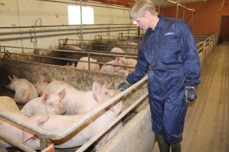 Harjunmaan palkitussa lihasikalassa oma härkäpaputuotanto korvaa tuontisoijan