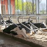 Eläinten olosuhteisiin on satsattu. Parsirakenteet ovat uusimman tietämyksen mukaisia, väljiä ja avoimia. Syväpohjaisissa, kuivitetuissa parsissa ei synny hiertymiä, ja lehmien on mukava maata.