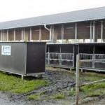 Tällä tilalla vasikat kasvatetaan yksilökarsinoissa, jotka ovat kolmen karsinan ryhmissä, sonnivasikat ulkorivissä ja lehmävasikat sisemmässä. Kolmeseinäisissä karsinoissa on katto ja alla paikat trukkipiikeille. Kun kolmikko on valmis noudettavaksi, katos nostetaan etukuormaimella ja siirretään erilleen paikkaan, josta välitysauto hakee vasikat. Tässäkään vieraiden ei tarvitse mennä tuotantorakennuksiin, ja autonkuljettaja saa vasikat kyytiin ilman apua. Vaunu voidaan pestä ulkona heti, kun vasikat ovat lähteneet. Hinta Tanskassa 1800 € +alv.